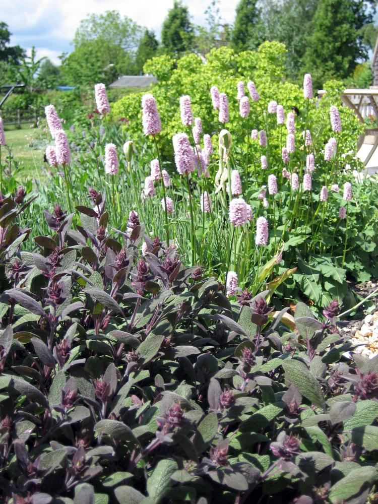Cottage Garden Design (Romsey, Hampshire) | Amy Perkins ...