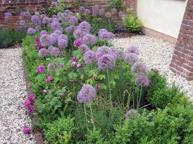 cottage garden  romsey, hampshire  amy perkins garden design, Natural flower