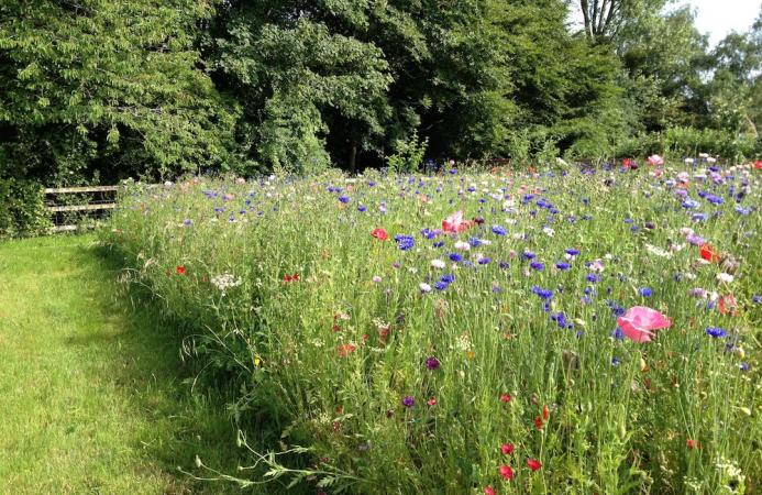 Wildflower meadow, Country Estate, Hampshire