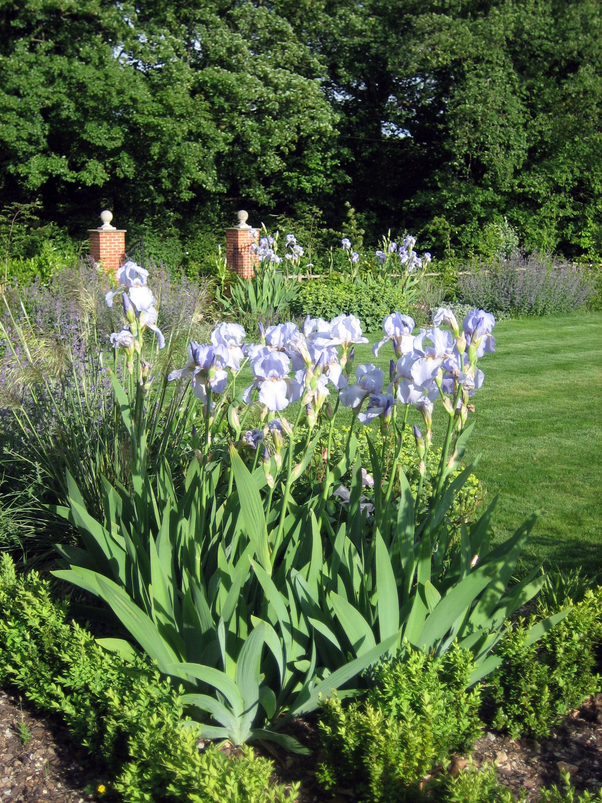 Rural garden hampshire amy perkins garden design for Rural garden designs
